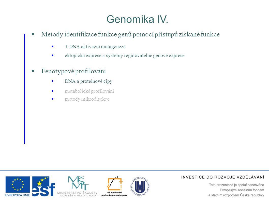  Fenotypové profilování Genomika IV.  metabolické profilování  DNA a proteinové čipy  Metody identifikace funkce genů pomocí přístupů získané funk