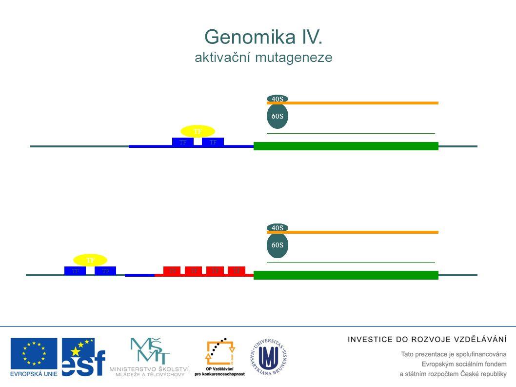 TF 40S 60S TF 40S 60S 40S 60S 40S 60S 40S 60S Genomika IV. aktivační mutageneze TF