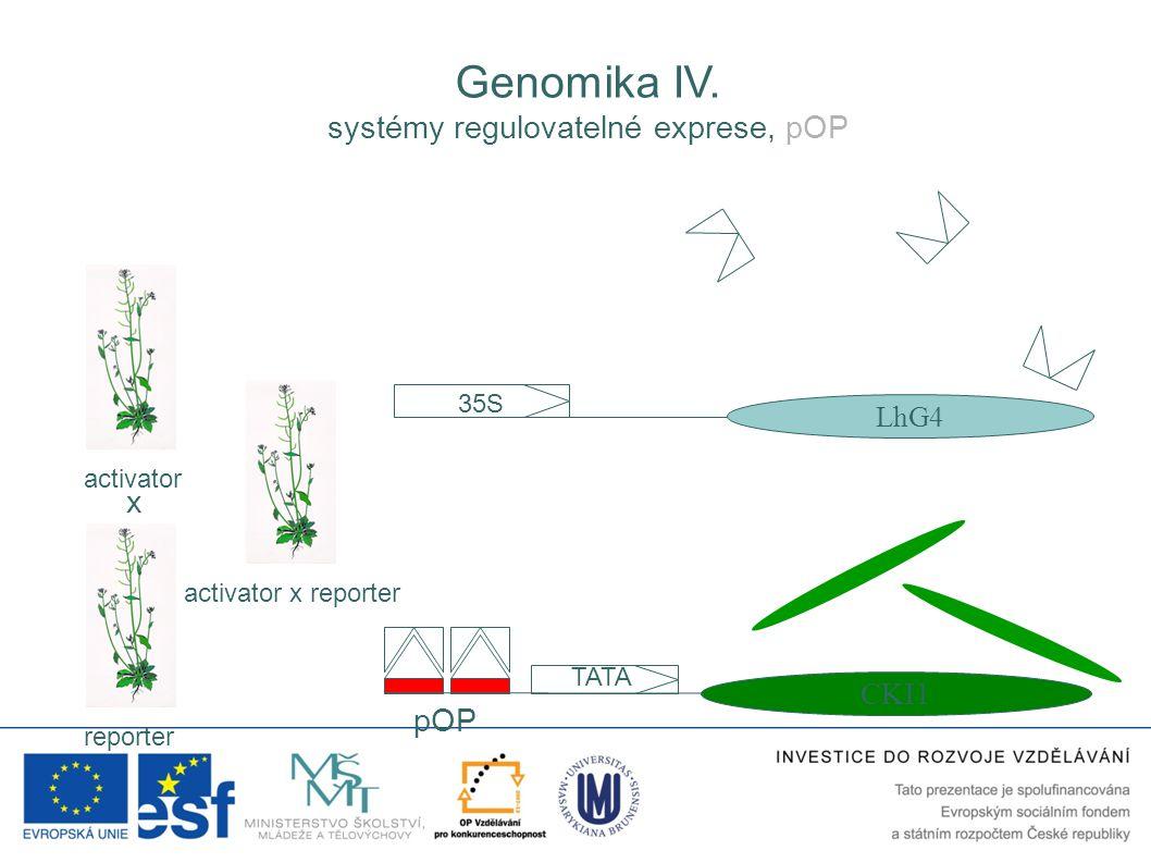 35S LhG4 pOP TATA CKI1 activator reporter activator x reporter x Genomika IV. systémy regulovatelné exprese, pOP
