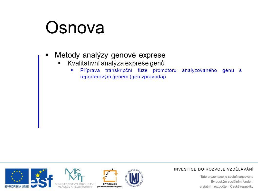  Metody analýzy genové exprese  Kvalitativní analýza exprese genů  Příprava transkripční fůze promotoru analyzovaného genu s reporterovým genem (ge