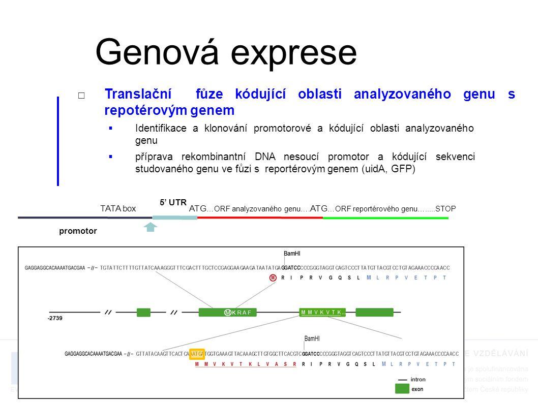 RNA localization - methods □MS2 system Nevo-Dinur et al., Science, 2011