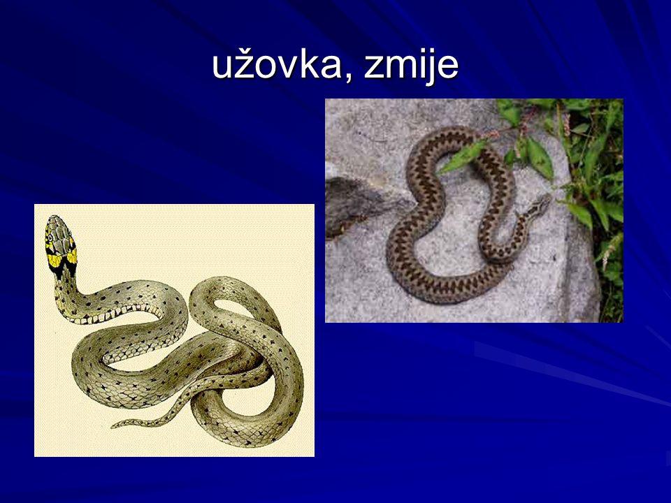 užovka, zmije