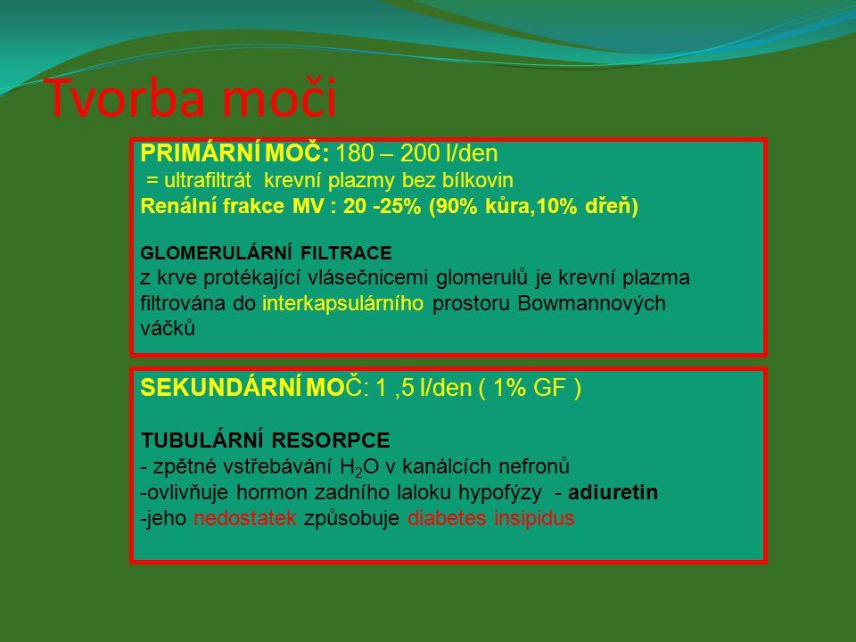 Definitivní moč 1-1,5 l denně, H 2 O, 3% N látek Primární moč 180 l denně, jako krevní plazma bez proteinů zahuštění vstřebáváním vody, solí, glukózy, AK Bowmanův váček glomerul arteriola ledvinné tepny větev ledvinné žíly kapiláry ledvinný tubul sběrný kanálek k ledvinné pánvičce Henleova klička