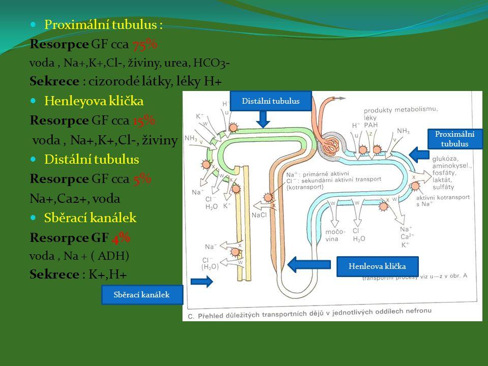 Proximální tubulus : Resorpce GF cca 75% voda, Na+,K+,Cl-, živiny, urea, HCO3- Sekrece : cizorodé látky, léky H+ Henleyova klička Resorpce GF cca 15% voda, Na+,K+,Cl-, živiny Distální tubulus Resorpce GF cca 5% Na+,Ca2+, voda Sběrací kanálek Resorpce GF 4% voda, Na + ( ADH) Sekrece : K+,H+ Proximální tubulus Henleova klička Distální tubulus Sběrací kanálek