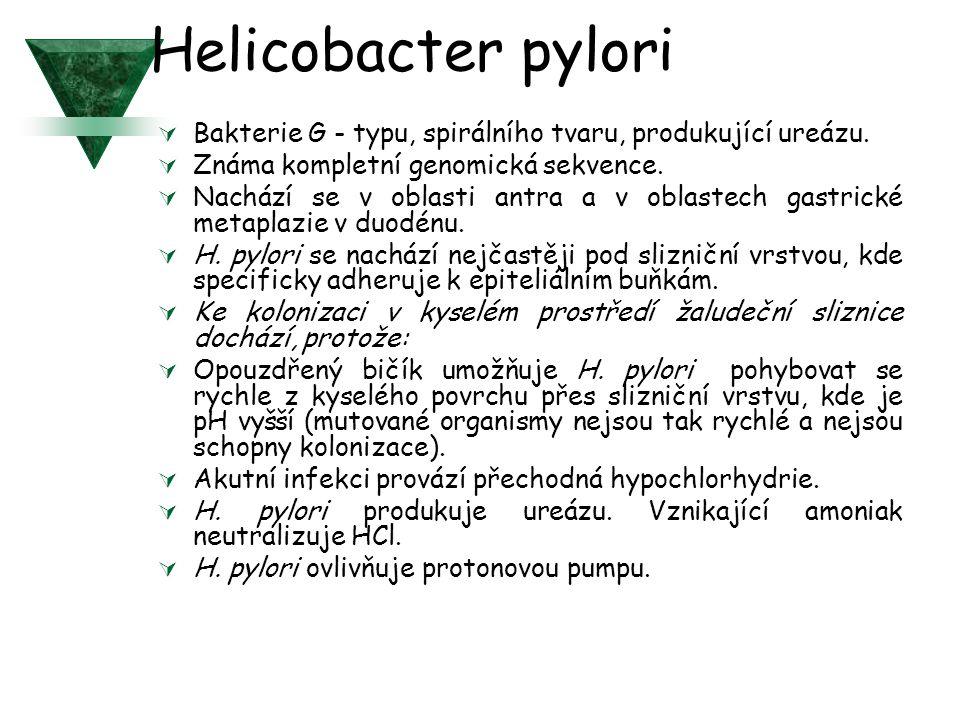 Helicobacter pylori  Bakterie G - typu, spirálního tvaru, produkující ureázu.  Známa kompletní genomická sekvence.  Nachází se v oblasti antra a v