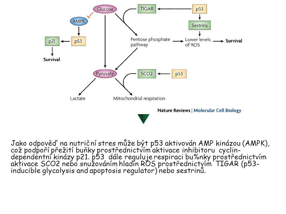 Jako odpověď na nutriční stres může být p53 aktivován AMP kinázou (AMPK), což podpoří přežití buňky prostřednictvím aktivace inhibitoru cyclin- depend