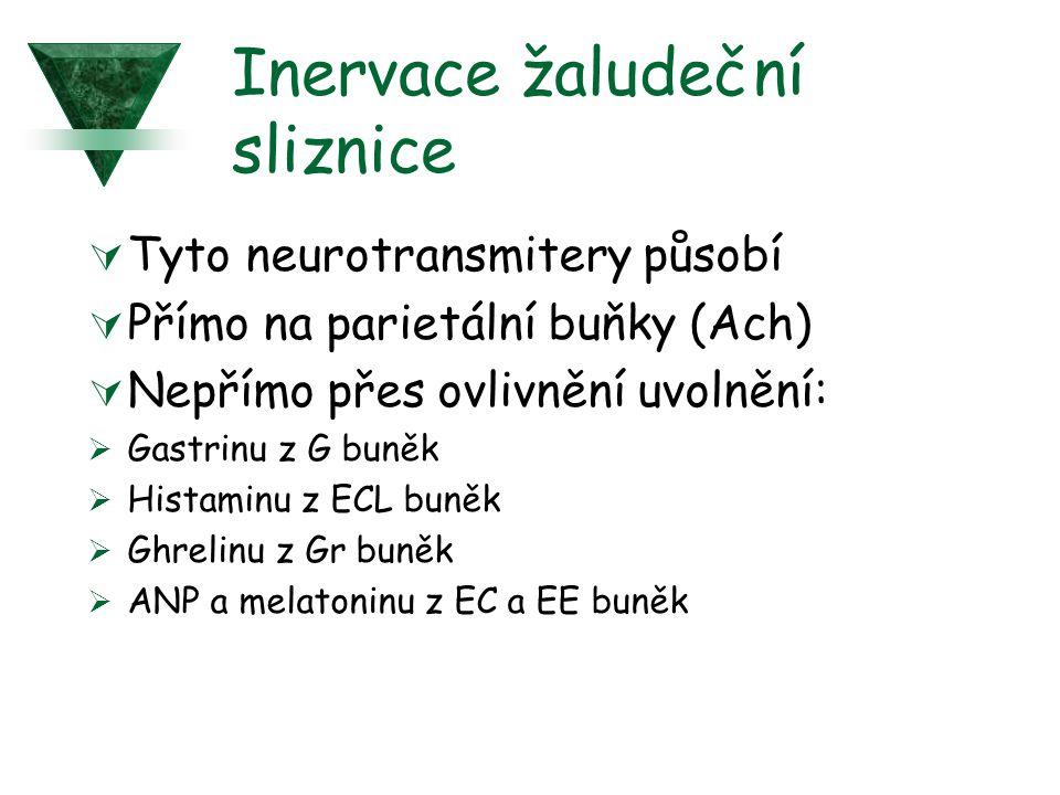 Inervace žaludeční sliznice  Tyto neurotransmitery působí  Přímo na parietální buňky (Ach)  Nepřímo přes ovlivnění uvolnění:  Gastrinu z G buněk  Histaminu z ECL buněk  Ghrelinu z Gr buněk  ANP a melatoninu z EC a EE buněk