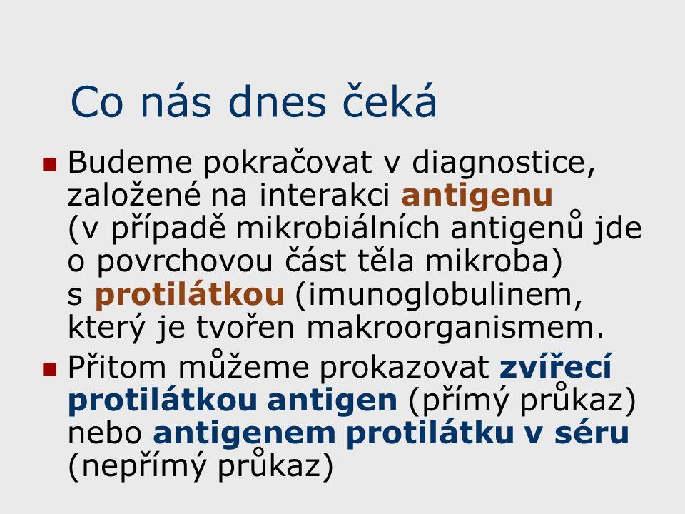 Průkaz antigenu a antigenní analýza (pro připomenutí) V rámci průkazu antigenu (tedy přímého průkazu) lze ještě dále rozlišit dva podtypy: Přímý průkaz antigenu ve vzorku, například ve vzorku mozkomíšního moku Antigenní analýza (identifikace) kmene, izolovaného ze vzorku (například kmene meningokoka) U nepřímého průkazu naopak vždy pracujeme se vzorkem, a to se vzorkem séra, kde hledáme protilátky