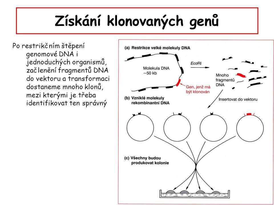 Získání klonovaných genů Po restrikčním štěpení genomové DNA i jednoduchých organismů, začlenění fragmentů DNA do vektoru a transformaci dostaneme mno