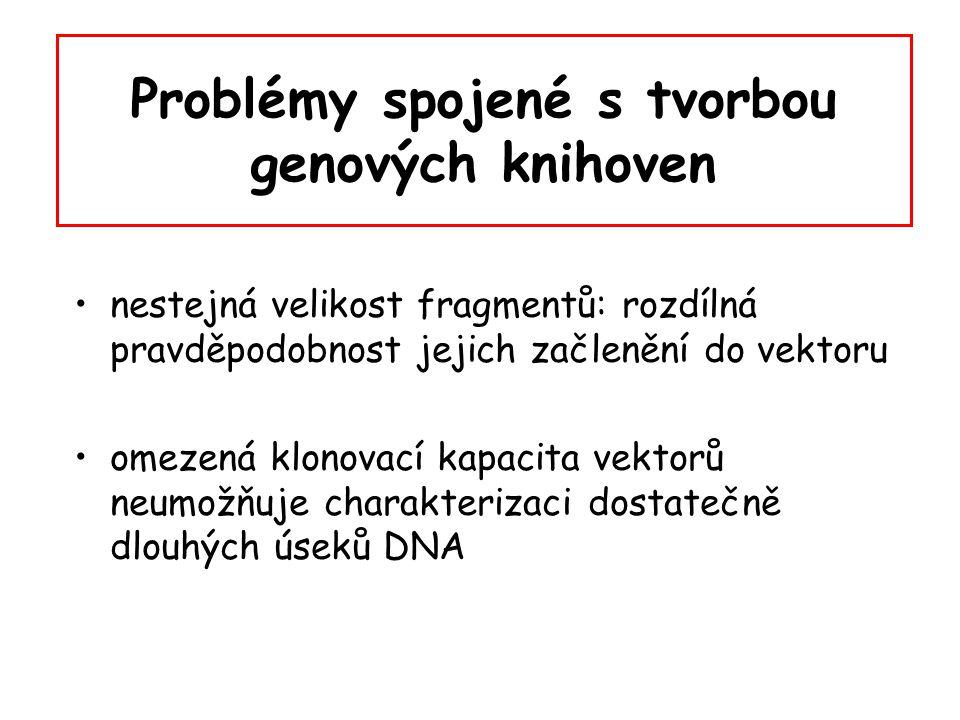 Problémy spojené s tvorbou genových knihoven nestejná velikost fragmentů: rozdílná pravděpodobnost jejich začlenění do vektoru omezená klonovací kapac