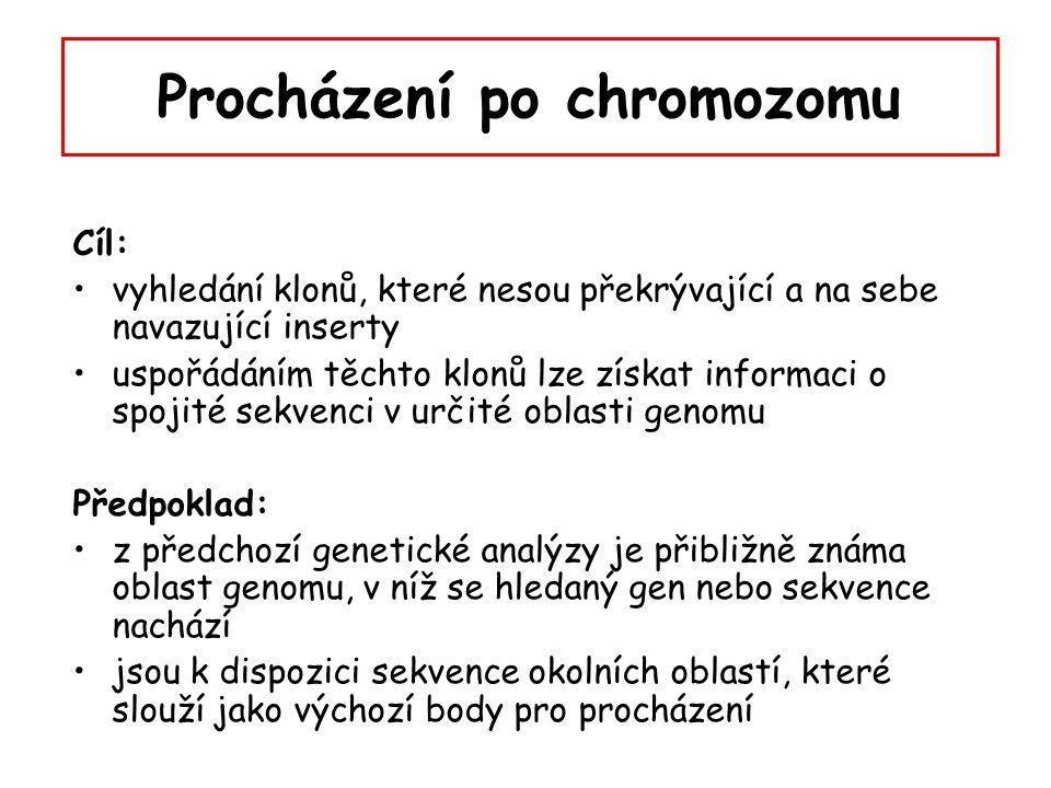Procházení po chromozomu Cíl: vyhledání klonů, které nesou překrývající a na sebe navazující inserty uspořádáním těchto klonů lze získat informaci o s