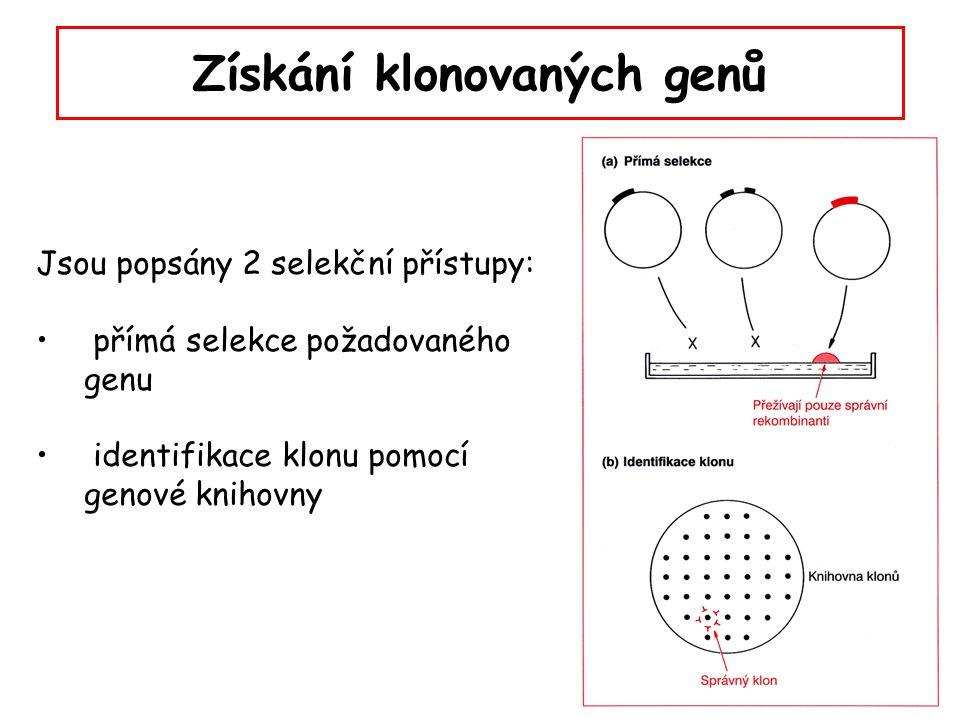 Přímá selekce Požadovaný gen přímo zajišťuje transformovaným buňkám vlastnost, kterou lze pro selekci využít (např.