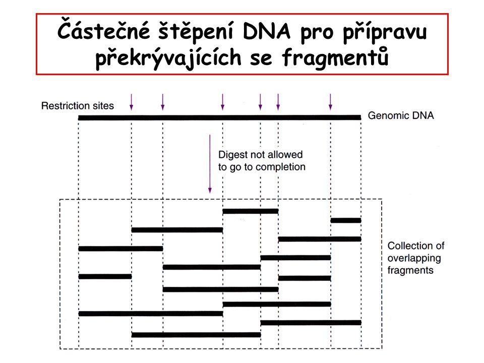 Částečné štěpení DNA pro přípravu překrývajících se fragmentů
