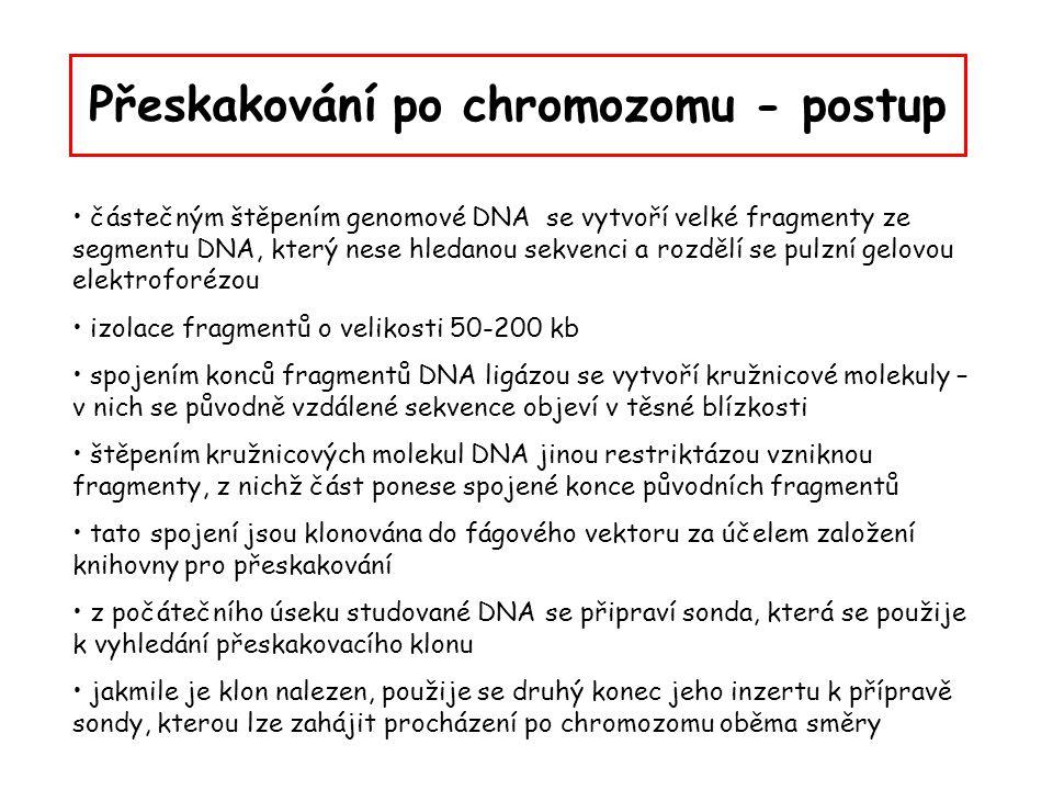 Přeskakování po chromozomu - postup částečným štěpením genomové DNA se vytvoří velké fragmenty ze segmentu DNA, který nese hledanou sekvenci a rozdělí