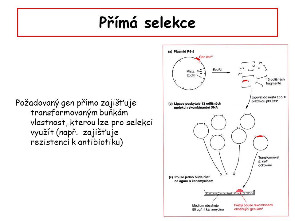 """Přímá selekce – """"marker rescue Princip: hostitelský bakteriální kmen nese mutaci pro některý z esenciálních znaků (např."""