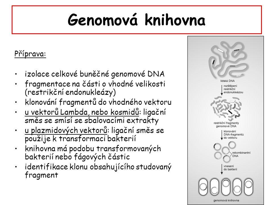 Genomová knihovna Příprava: izolace celkové buněčné genomové DNA fragmentace na části o vhodné velikosti (restrikční endonukleázy) klonování fragmentů