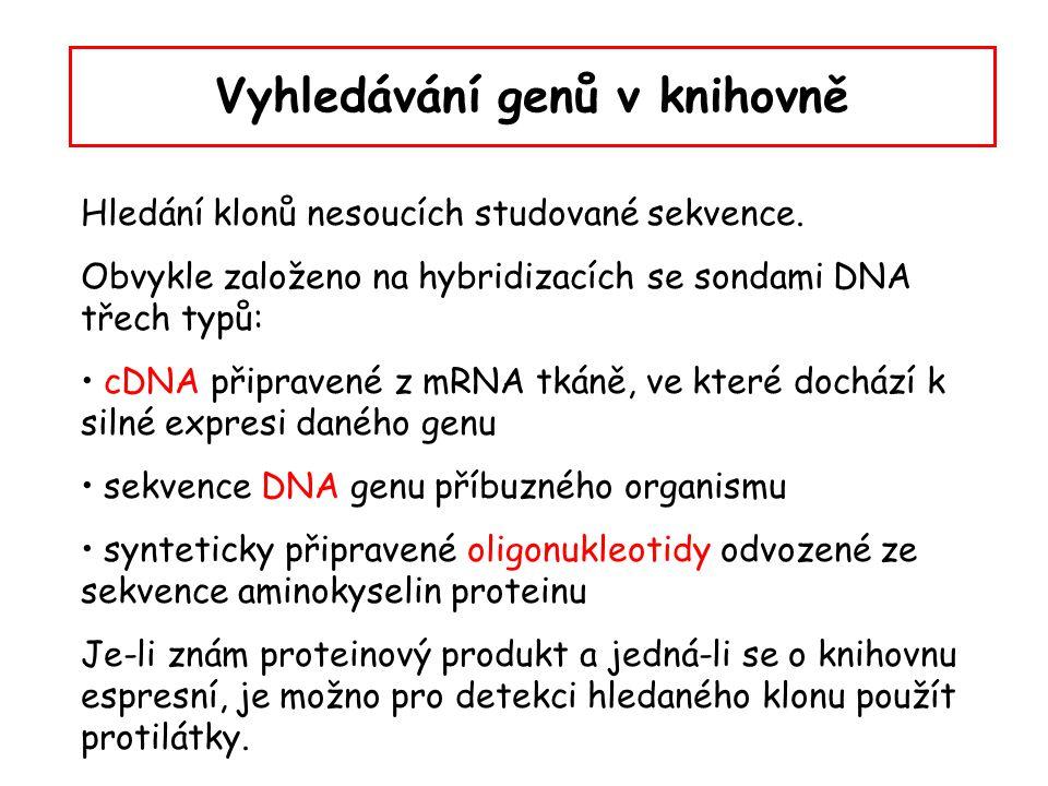 Prohledávání knihovny hybridizací (přístup in situ) kolonie nebo plaky jsou přeneseny na nitrocelulózovou nebo nylonovou membránu louhem je odstraněn kontaminující materiál, současně se denaturuje DNA zapečením při 80 o C (nitrocelulóza) nebo UV zářením (nylon) se jednovláknové molekuly DNA pevně spojí s membránou svou cukr- fosfátovou kostrou, báze se uvolní pro hybridizaci membránu promyjeme v roztoku se značenou sondou za hybridizačních podmínek promytí, sušení, autoradiografie nebo chemiluminiscence