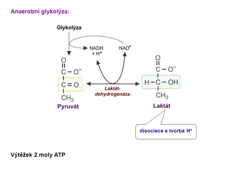 Anaerobní glykolýza: Výtěžek 2 moly ATP disociace a tvorba H +