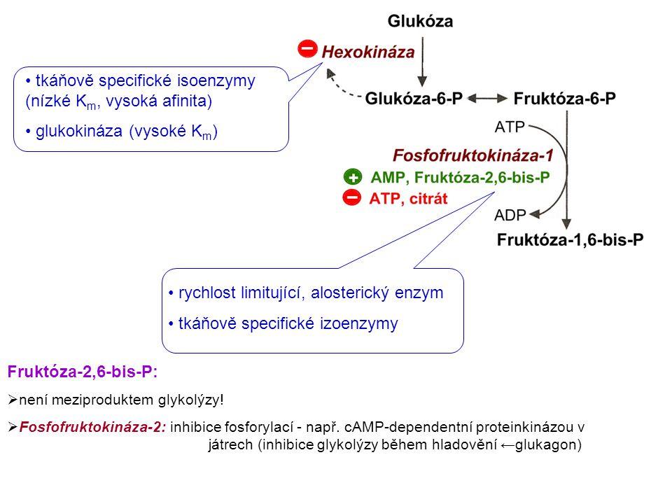 tkáňově specifické isoenzymy (nízké K m, vysoká afinita) glukokináza (vysoké K m ) rychlost limitující, alosterický enzym tkáňově specifické izoenzymy Fruktóza-2,6-bis-P:  není meziproduktem glykolýzy.