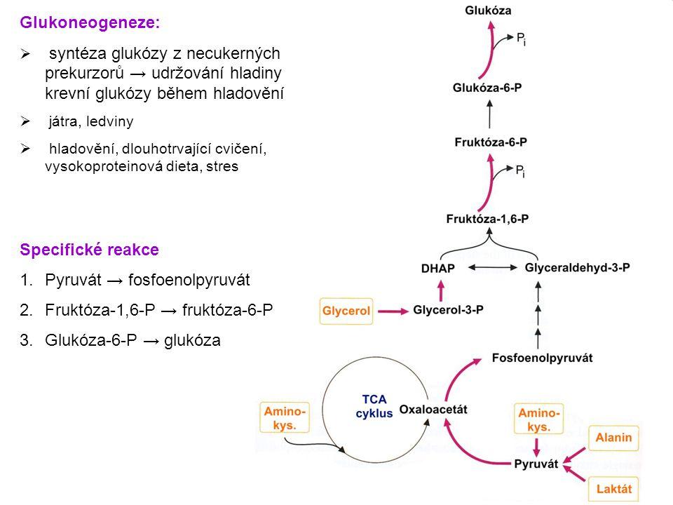 Glukoneogeneze:  syntéza glukózy z necukerných prekurzorů → udržování hladiny krevní glukózy během hladovění  játra, ledviny  hladovění, dlouhotrva