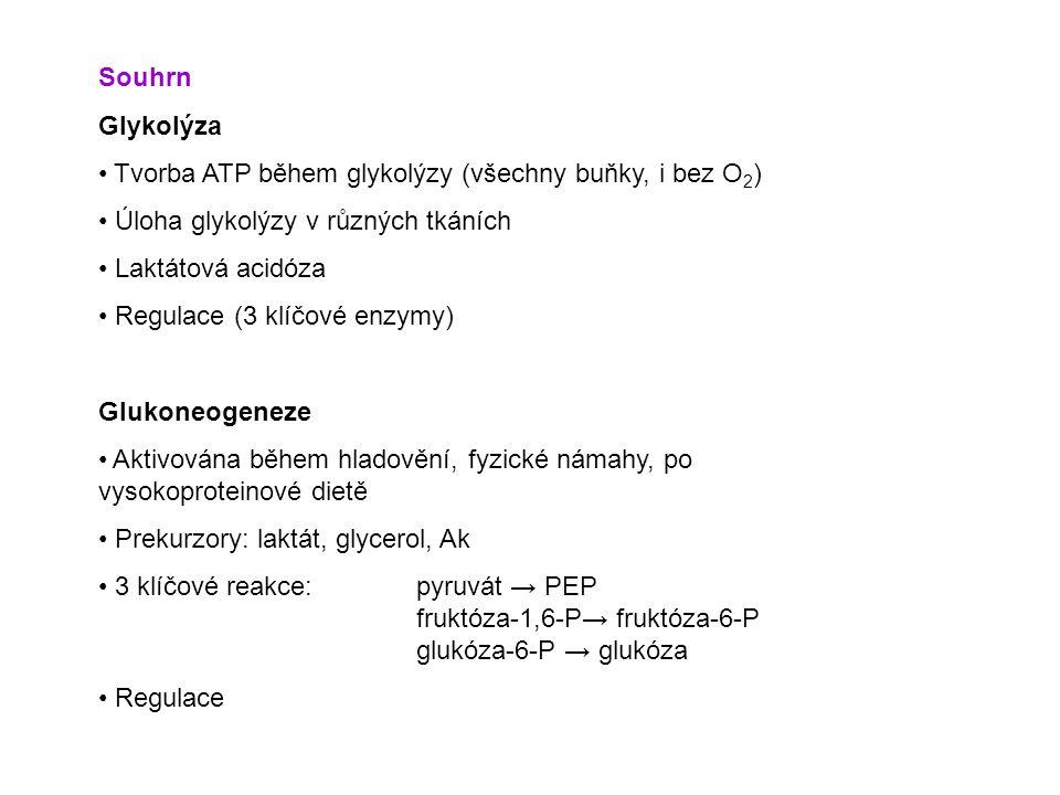 Souhrn Glykolýza Tvorba ATP během glykolýzy (všechny buňky, i bez O 2 ) Úloha glykolýzy v různých tkáních Laktátová acidóza Regulace (3 klíčové enzymy) Glukoneogeneze Aktivována během hladovění, fyzické námahy, po vysokoproteinové dietě Prekurzory: laktát, glycerol, Ak 3 klíčové reakce:pyruvát → PEP fruktóza-1,6-P→ fruktóza-6-P glukóza-6-P → glukóza Regulace