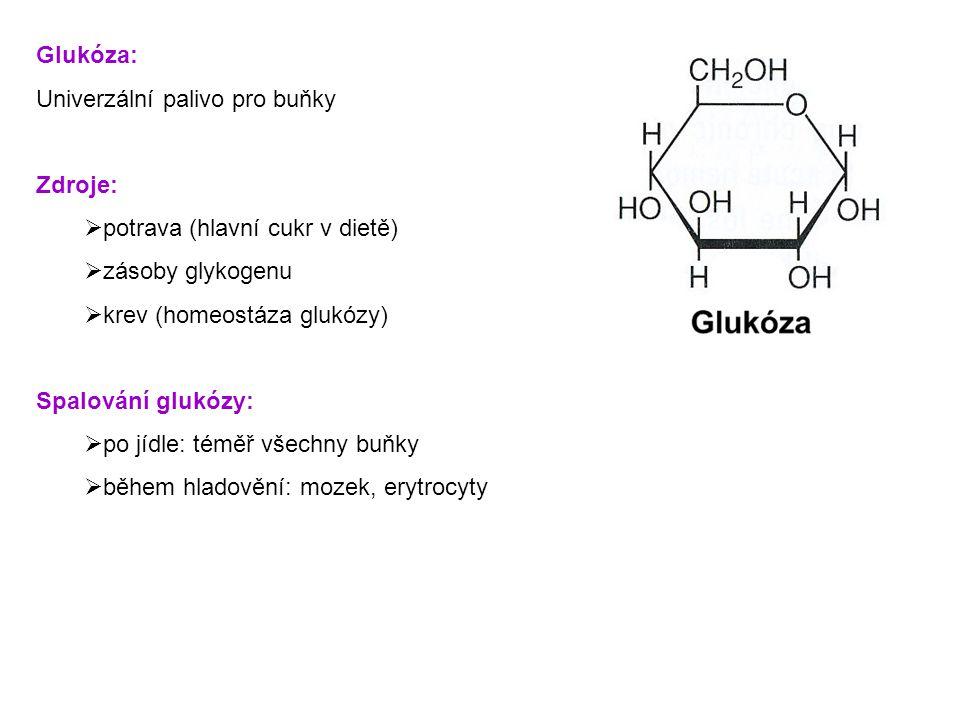 Glukóza: Univerzální palivo pro buňky Zdroje:  potrava (hlavní cukr v dietě)  zásoby glykogenu  krev (homeostáza glukózy) Spalování glukózy:  po jídle: téměř všechny buňky  během hladovění: mozek, erytrocyty
