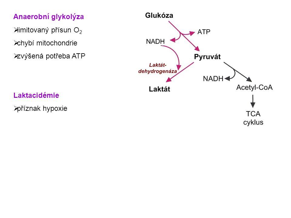 Konverze pyruvátu na fosfoenolpyruvát 1.Pyruvát → oxaloacetát  pyruvátkarboxyláza 2.