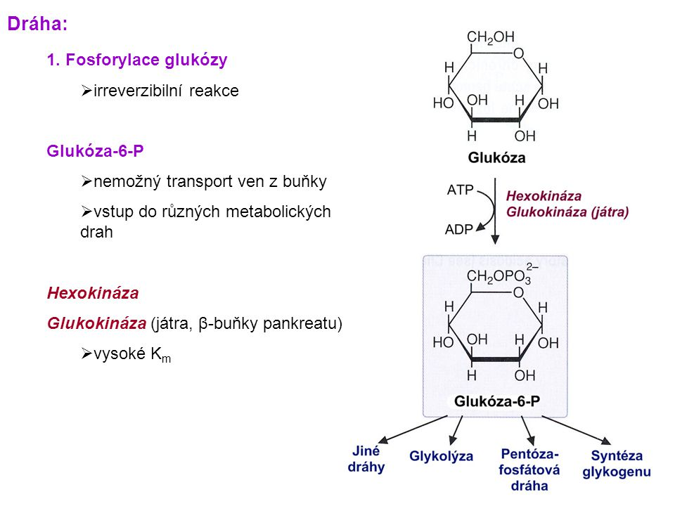 1. Fosforylace glukózy  irreverzibilní reakce Glukóza-6-P  nemožný transport ven z buňky  vstup do různých metabolických drah Hexokináza Glukokináz