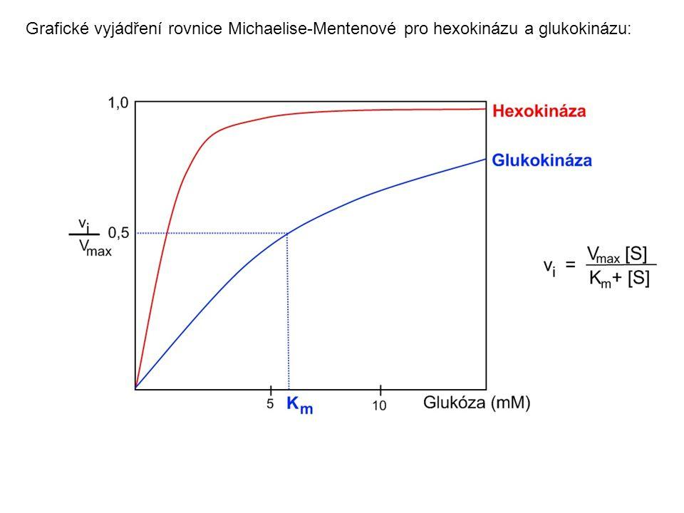 Grafické vyjádření rovnice Michaelise-Mentenové pro hexokinázu a glukokinázu: