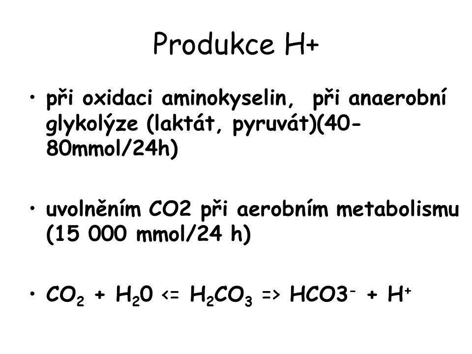 Produkce H+ při oxidaci aminokyselin, při anaerobní glykolýze (laktát, pyruvát)(40- 80mmol/24h) uvolněním CO2 při aerobním metabolismu (15 000 mmol/24 h) CO 2 + H 2 0 HCO3 - + H +