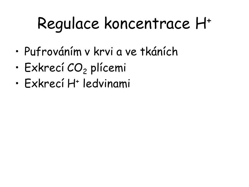 Regulace koncentrace H + Pufrováním v krvi a ve tkáních Exkrecí CO 2 plícemi Exkrecí H + ledvinami