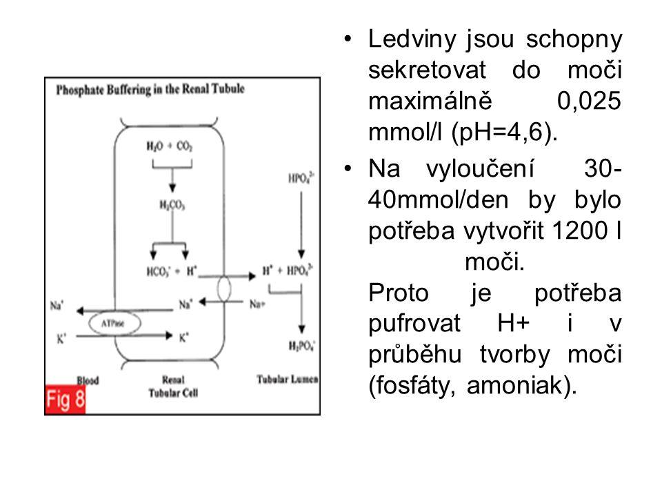 Ledviny jsou schopny sekretovat do moči maximálně 0,025 mmol/l (pH=4,6). Na vyloučení 30- 40mmol/den by bylo potřeba vytvořit 1200 l moči. Proto je po