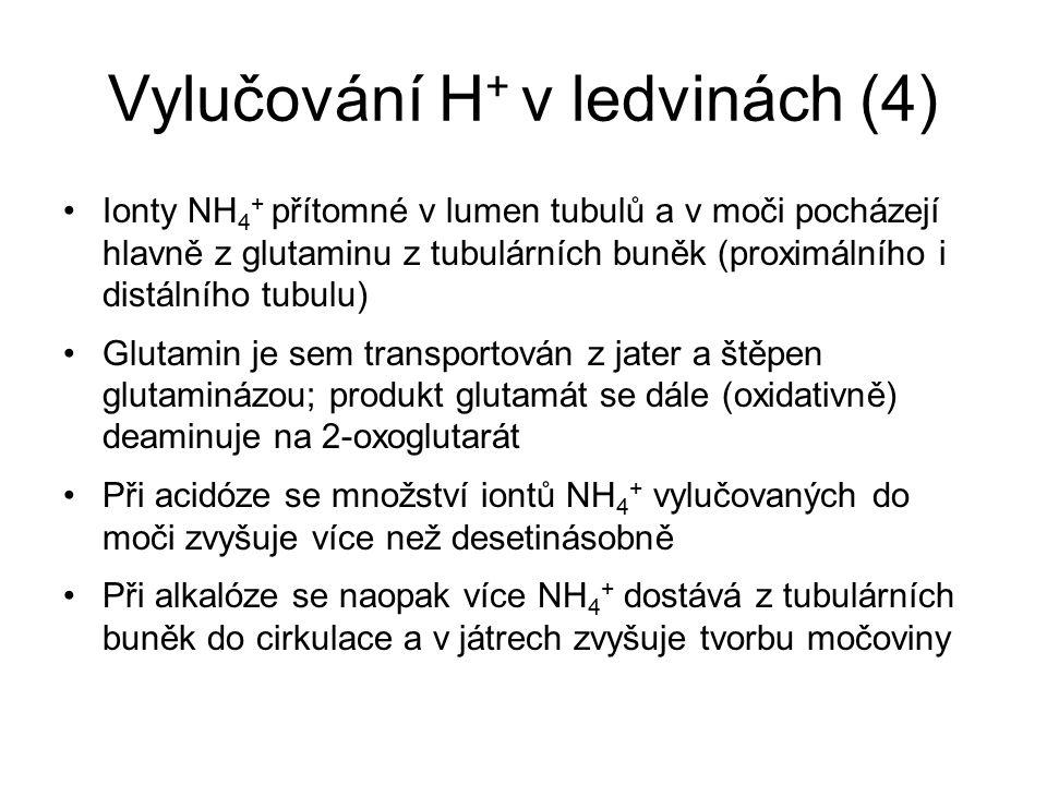 Vylučování H + v ledvinách (4) Ionty NH 4 + přítomné v lumen tubulů a v moči pocházejí hlavně z glutaminu z tubulárních buněk (proximálního i distální