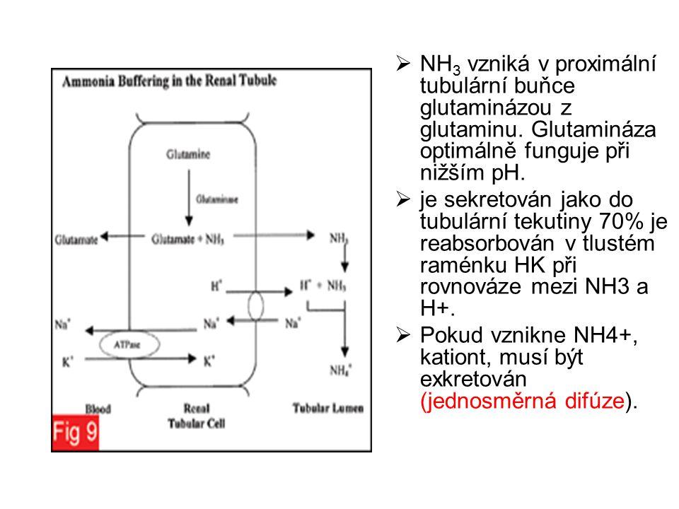  NH 3 vzniká v proximální tubulární buňce glutaminázou z glutaminu. Glutamináza optimálně funguje při nižším pH.  je sekretován jako do tubulární te