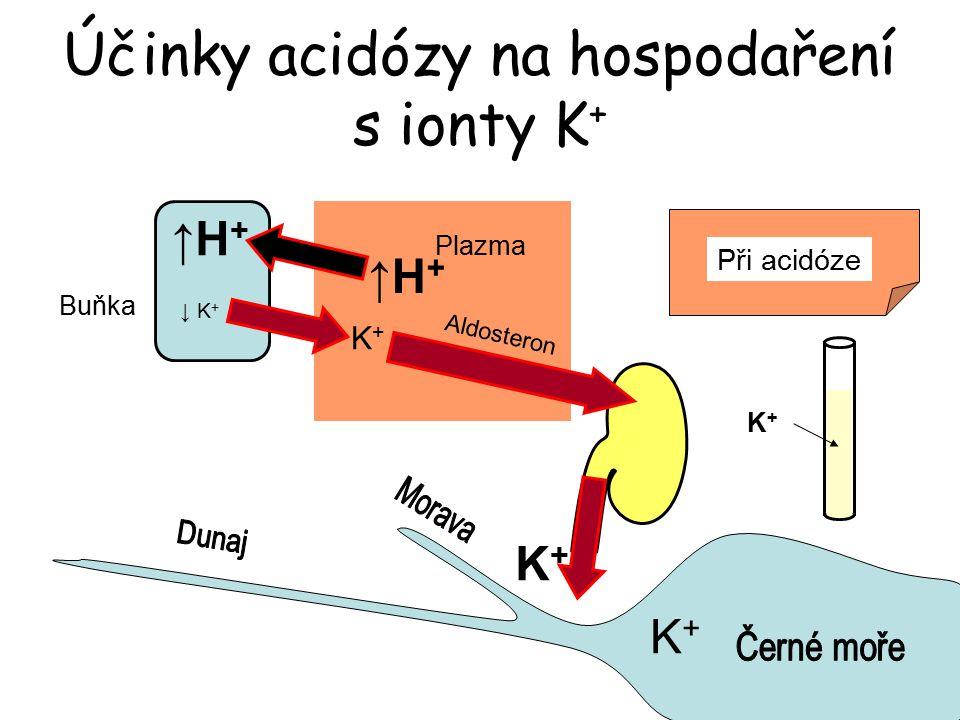 Účinky acidózy na hospodaření s ionty K + Buňka ↓ K + Plazma K+K+ ↑H+↑H+ K+K+ ↑H+↑H+ K+K+ Aldosteron Při acidóze K+K+