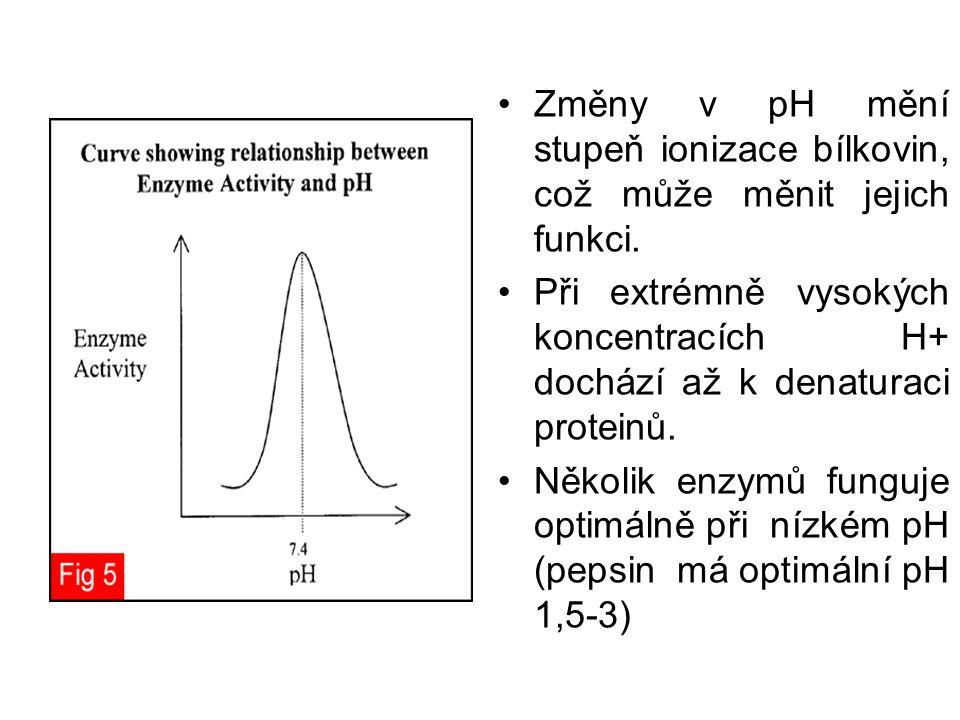 Změny v pH mění stupeň ionizace bílkovin, což může měnit jejich funkci. Při extrémně vysokých koncentracích H+ dochází až k denaturaci proteinů. Někol