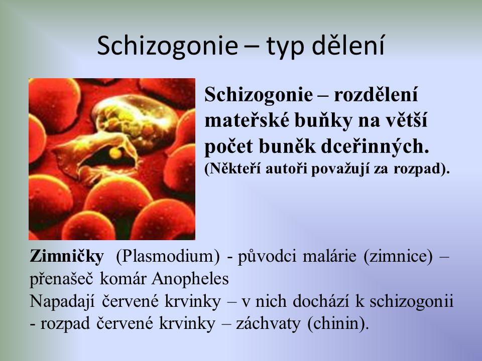 Schizogonie – typ dělení Schizogonie – rozdělení mateřské buňky na větší počet buněk dceřinných. (Někteří autoři považují za rozpad). Zimničky (Plasmo