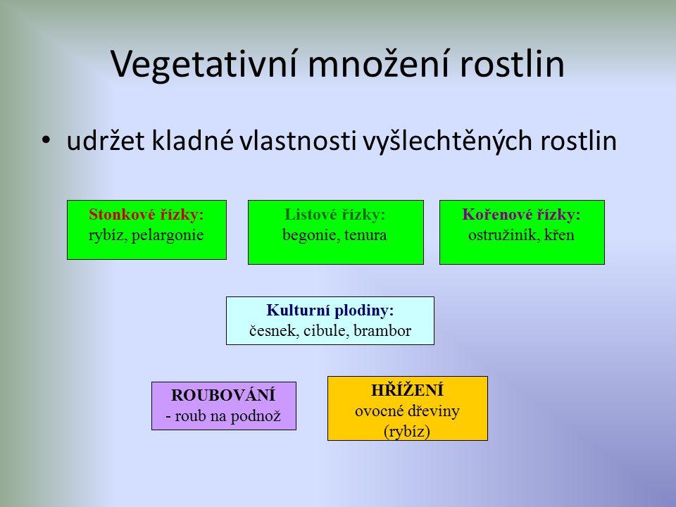 Vegetativní množení rostlin udržet kladné vlastnosti vyšlechtěných rostlin Kulturní plodiny: česnek, cibule, brambor Stonkové řízky: rybíz, pelargonie