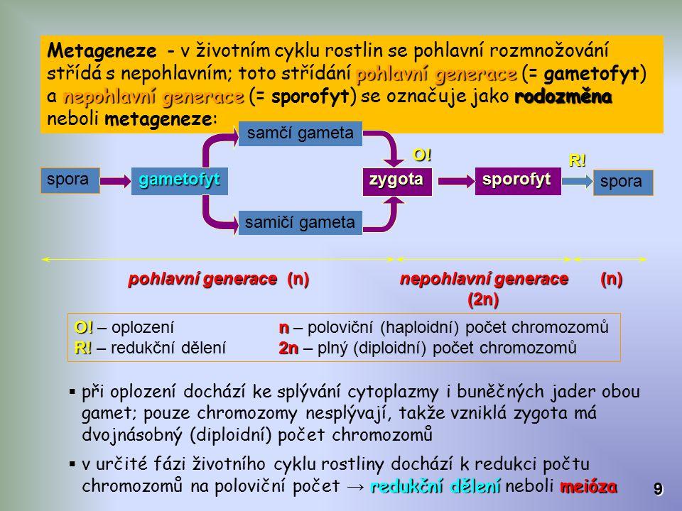 pohlavní generace nepohlavní generacerodozměna Metageneze - v životním cyklu rostlin se pohlavní rozmnožování střídá s nepohlavním; toto střídání pohl