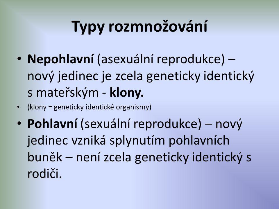 Typy rozmnožování Nepohlavní (asexuální reprodukce) – nový jedinec je zcela geneticky identický s mateřským - klony. (klony = geneticky identické orga