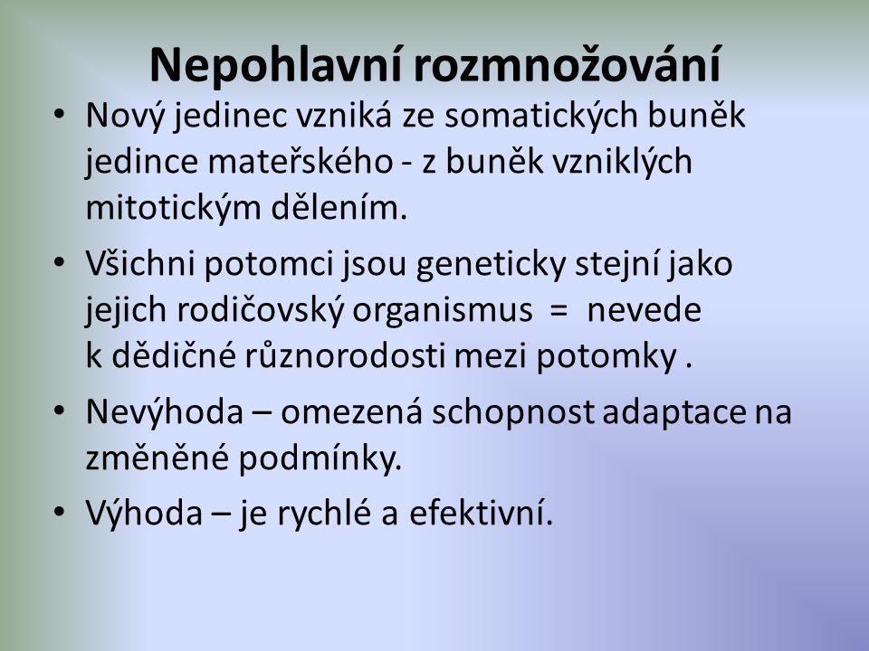 Nepohlavní rozmnožování Nový jedinec vzniká ze somatických buněk jedince mateřského - z buněk vzniklých mitotickým dělením. Všichni potomci jsou genet