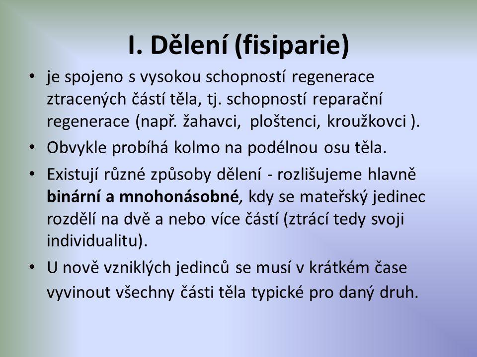 I. Dělení (fisiparie) je spojeno s vysokou schopností regenerace ztracených částí těla, tj. schopností reparační regenerace (např. žahavci, ploštenci,