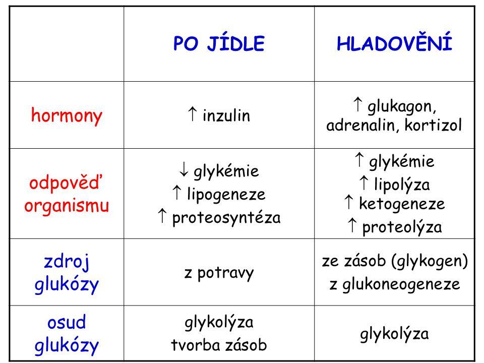 PO JÍDLEHLADOVĚNÍ hormony  inzulin  glukagon, adrenalin, kortizol odpověď organismu  glykémie  lipogeneze  proteosyntéza  glykémie  lipolýza 