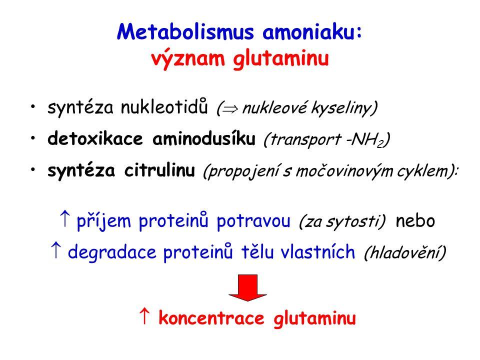 Metabolismus amoniaku: význam glutaminu syntéza nukleotidů (  nukleové kyseliny) detoxikace aminodusíku (transport -NH 2 ) syntéza citrulinu (propoje