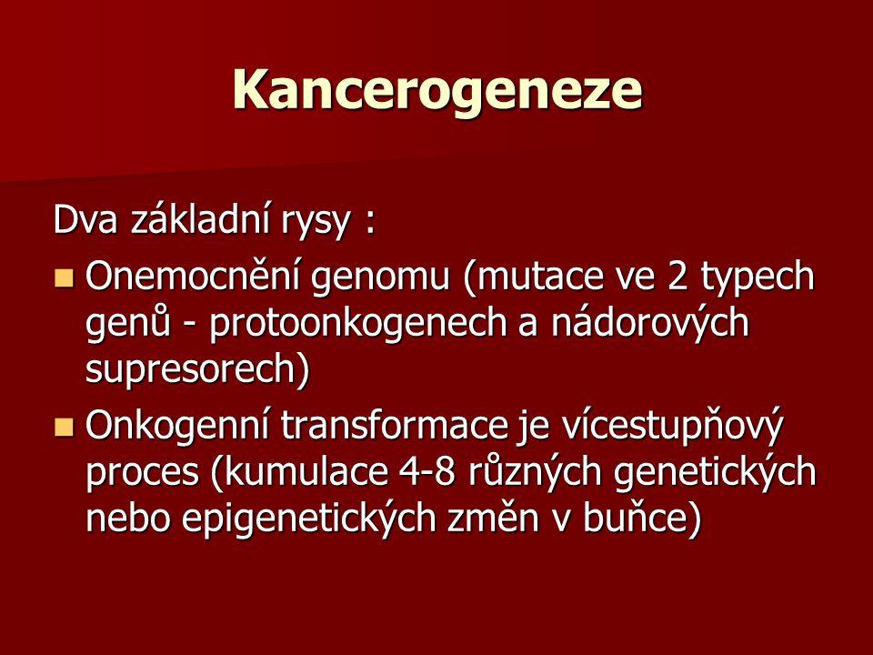 Kancerogeneze Dva základní rysy : Onemocnění genomu (mutace ve 2 typech genů - protoonkogenech a nádorových supresorech) Onemocnění genomu (mutace ve 2 typech genů - protoonkogenech a nádorových supresorech) Onkogenní transformace je vícestupňový proces (kumulace 4-8 různých genetických nebo epigenetických změn v buňce) Onkogenní transformace je vícestupňový proces (kumulace 4-8 různých genetických nebo epigenetických změn v buňce)