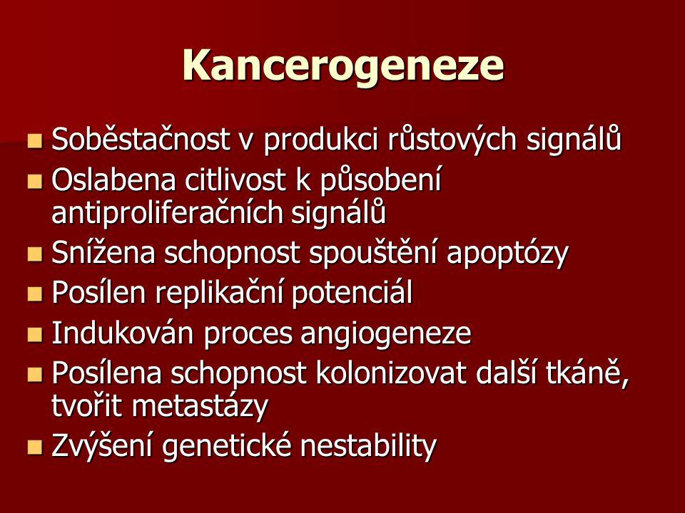 Kancerogeneze Soběstačnost v produkci růstových signálů Soběstačnost v produkci růstových signálů Oslabena citlivost k působení antiproliferačních signálů Oslabena citlivost k působení antiproliferačních signálů Snížena schopnost spouštění apoptózy Snížena schopnost spouštění apoptózy Posílen replikační potenciál Posílen replikační potenciál Indukován proces angiogeneze Indukován proces angiogeneze Posílena schopnost kolonizovat další tkáně, tvořit metastázy Posílena schopnost kolonizovat další tkáně, tvořit metastázy Zvýšení genetické nestability Zvýšení genetické nestability