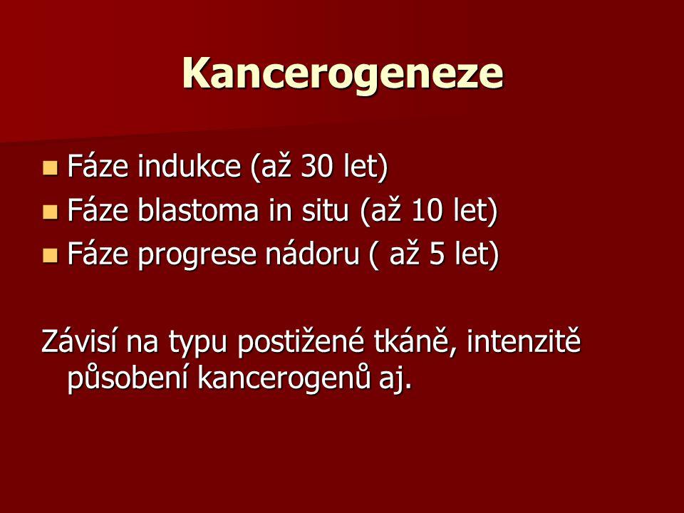 Kancerogeneze Fáze indukce (až 30 let) Fáze indukce (až 30 let) Fáze blastoma in situ (až 10 let) Fáze blastoma in situ (až 10 let) Fáze progrese nádoru ( až 5 let) Fáze progrese nádoru ( až 5 let) Závisí na typu postižené tkáně, intenzitě působení kancerogenů aj.
