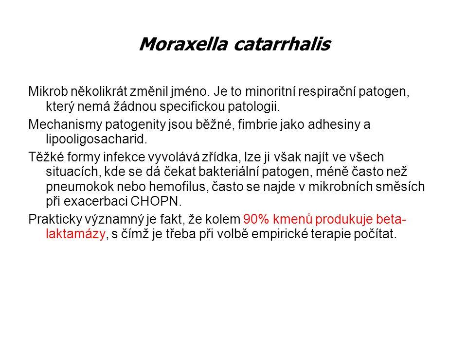 Moraxella catarrhalis Mikrob několikrát změnil jméno. Je to minoritní respirační patogen, který nemá žádnou specifickou patologii. Mechanismy patogeni