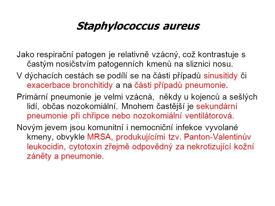 Staphylococcus aureus Jako respirační patogen je relativně vzácný, což kontrastuje s častým nosičstvím patogenních kmenů na sliznici nosu. V dýchacích
