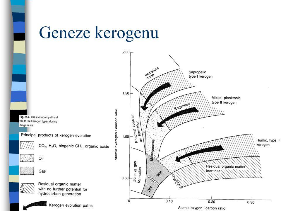 Geneze kerogenu